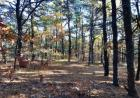 80 Perch Pond Way, Wellfleet, MA 02667, $389,000