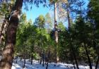 39472 Woodland Rd #65, Shaver Lake, CA 93664, $189,000