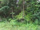 Vacant lot in Sweetwater  TN - 37874
