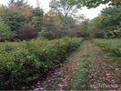Vacant lot in Westford  NY - 13488