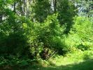 Vacant lot in Selkirk  NY - 12158