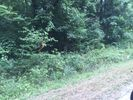 Vacant lot in Tracy City  TN - 37387
