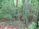 Vacant lot in Copperhill  TN - 37317